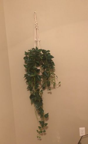 Plant fake tree for Sale in Houston, TX