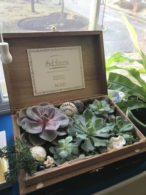 Succulent planters! Great gifts for Men, Women and Children for Sale in Chelsea, MA