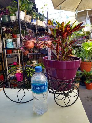 BIKE & OUTDOOR PLANT for Sale in Paramount, CA