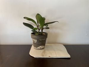 Ceramic Plant Tray for Sale in Helotes, TX