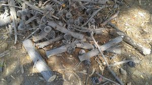 Firewood 100% Hardwood the Best for Sale in Arroyo Grande, CA