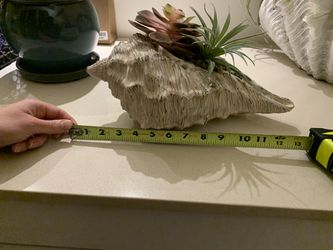 Decorative Feux Plant/Succulent in Shell for Sale in Arlington,  VA