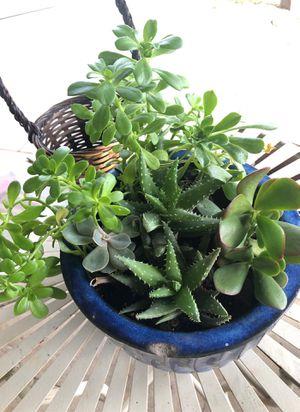 Succulent pot for Sale in Stockton, CA