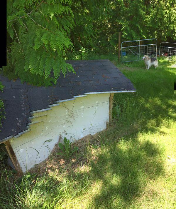 Huge Dog house custom build 🏡hold two big dogs
