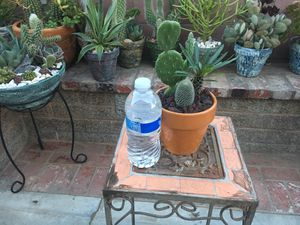 Rustic centerpiece with Madagascar palm and Cactus for Sale in Bloomington, CA