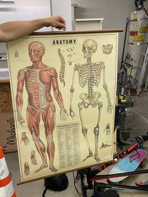 Vintage anatomy poster for Sale in Laguna Niguel, CA