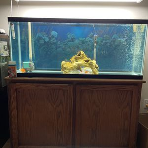 55 Gallon Tank, Stand And Fish for Sale in Hillsboro, OR