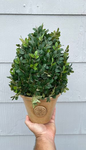 Faux topiary for Sale in Orlando, FL