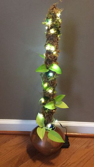 House plant moss pole for Sale in Charlottesville, VA