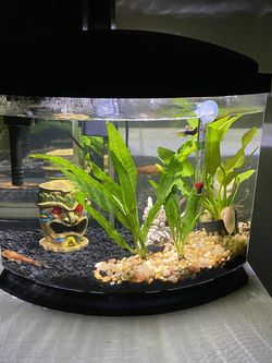 fish tank for Sale in Yaphank,  NY