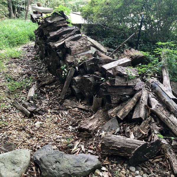 Free firewood- Mt Vernon area