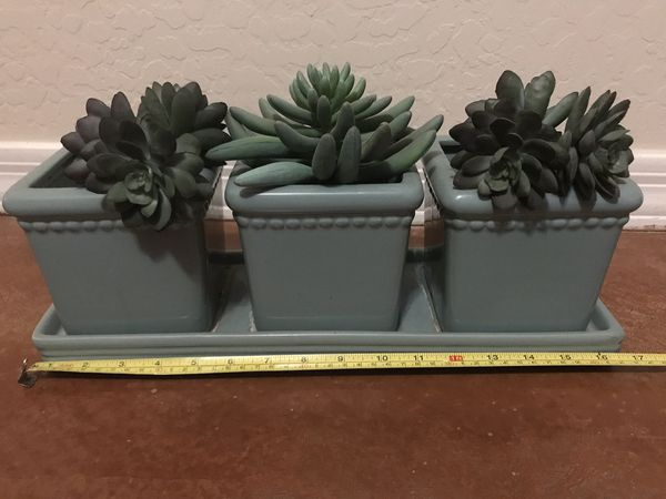 Succulents and 3 section pot holder connected to base