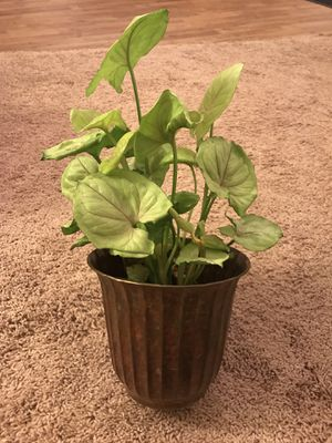 Brass planter for Sale in Franklin, TN