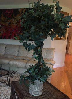 Topiary Plant/Tree in pot for Sale in Kirkland,  WA