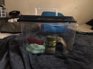 Hermit crab or lizard carrier for Sale in Ontario, CA