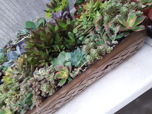 "18"" Long metal pot with succulent plants for Sale in La Mirada, CA"