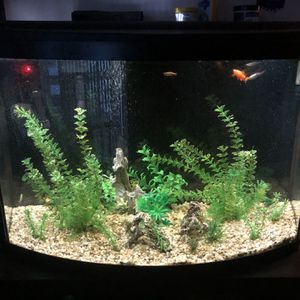 Fish Tank 36 Gallon With Everything for Sale in Culver City, CA