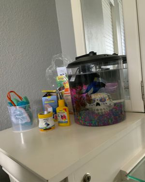 Beta fish for Sale in Flower Mound, TX