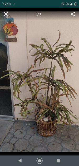 Fake plant for Sale in San Bernardino, CA