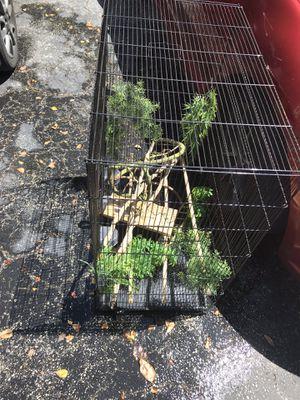 Bird / Reptile Cage for Sale in Davie, FL