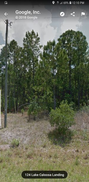 Pine trees for sale. for Sale in Frostproof, FL