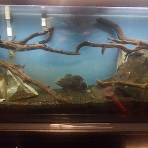 Aquarium Rocks & Driftwood for Sale in San Jose, CA