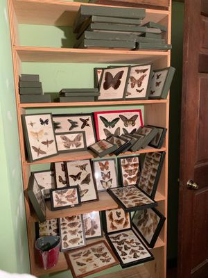 Butterfly collection for Sale in Greenwich, CT