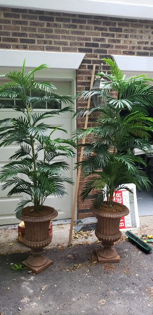 Artificial plants for Sale in Rockville, MD