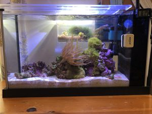 5 gallon Fluval all-in-one tank for Sale in Irvine, CA