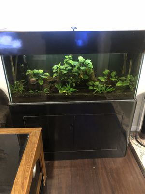 60 gallon freshwater aquarium for Sale in Spring Valley, CA