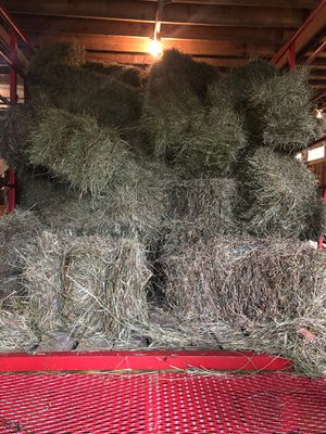 Second cut hay for Sale in Litchfield, OH