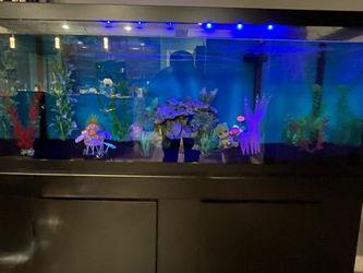 75 Gal Aquarium for Sale in Apollo Beach,  FL