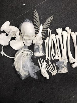 Anatomy Bones for Sale in Rancho Cucamonga, CA