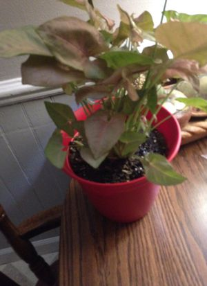 Unkown Lifeform well a plant for Sale in Grand Rapids, MI