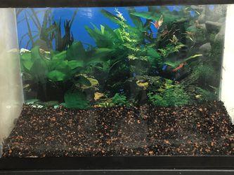20 Gallon Aquarium for Sale in Ballwin,  MO