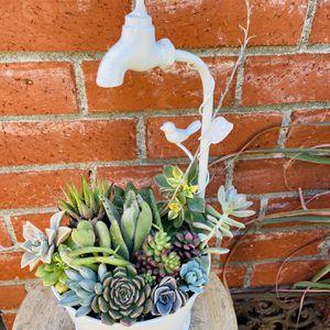 Beautiful Succulent Arrangement for Sale in Whittier, CA