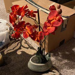 Decorative Plant for Sale in North Ridgeville,  OH