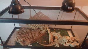 Bearded Dragon for Sale in LaBelle, FL