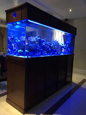300 gallon reef tank for Sale in Los Angeles, CA