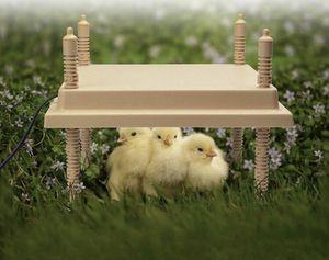Titan brooder hen for Sale in Vernon, CA