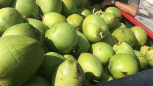 Cocos $1 each for Sale in Deltona, FL