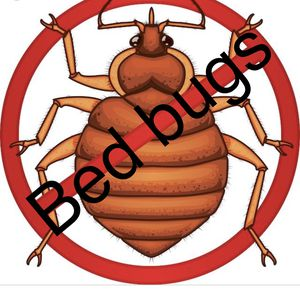 !BedBug! !Chinches! for Sale in Phoenix, AZ