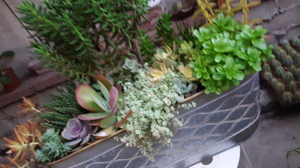 """20"""" Long metal pot with succulent plants today only $28"""