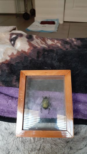 A bug that's in a picture frame for Sale in Austin, TX
