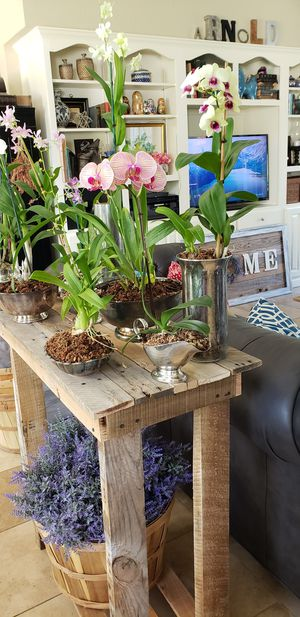 Beautiful live orchids planted in vintage metal and mercury glass for Sale in Bartow, FL