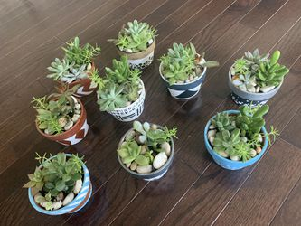 "Succulent arrangement real live plants in 3"" terra-cotta hand painted pots for Sale in Stone Ridge,  VA"