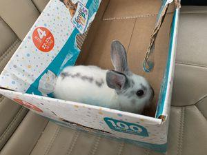 Easter Rabbit🤷🏽♀️ for Sale in Nashville, TN