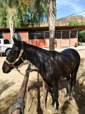 Beautiful friendly filly for Sale in Los Angeles, CA
