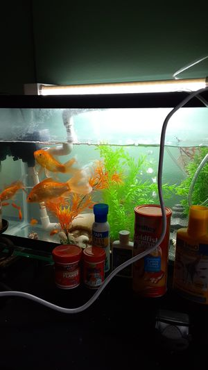 Fish tank with fish and decorations for Sale in Long Beach, CA