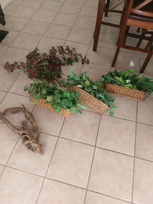 Fake plants for Sale in Glendale, AZ